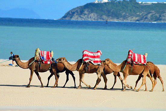 Tangier-Beach-Camels
